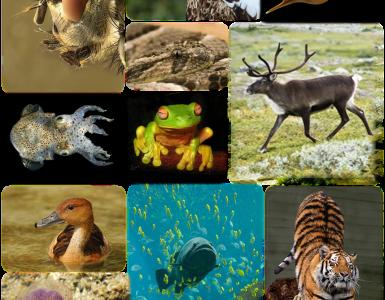 Kraljestvo živali.
