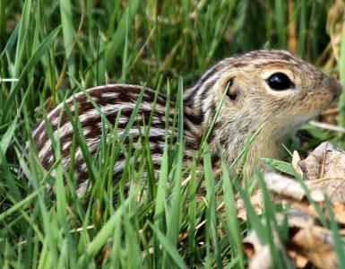 Veverica. Foto: Greg Schechter/Wikimedia