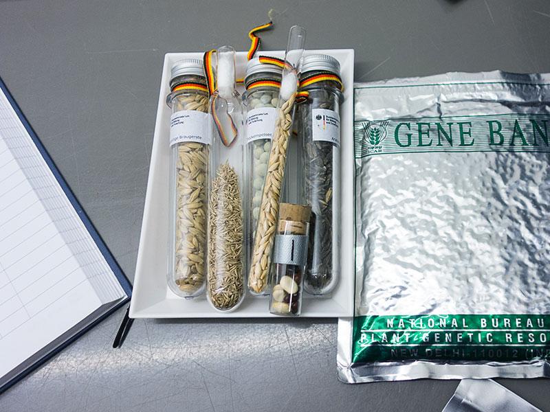 Semena v banki semen. Vir: Crop Trust