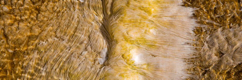 Bakterije na elektriko v parku Yellowstone. Foto: Neal Herbert/NPS