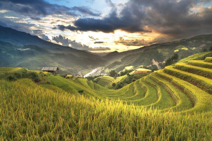 Riževa polja v Vietnamu. Foto: Quang Nguyen vinh/Pixabay