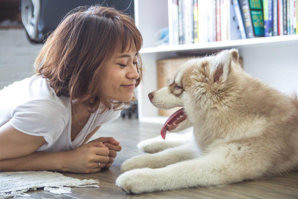 Zakaj so pasje oči žalostne. Vir: Pexels