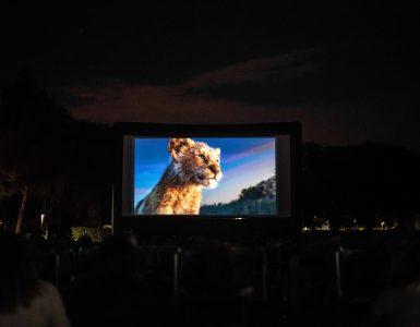 Levji kralj na plaži v Bernardinu. Foto. Matic Kremžar/Kino Bežigrad