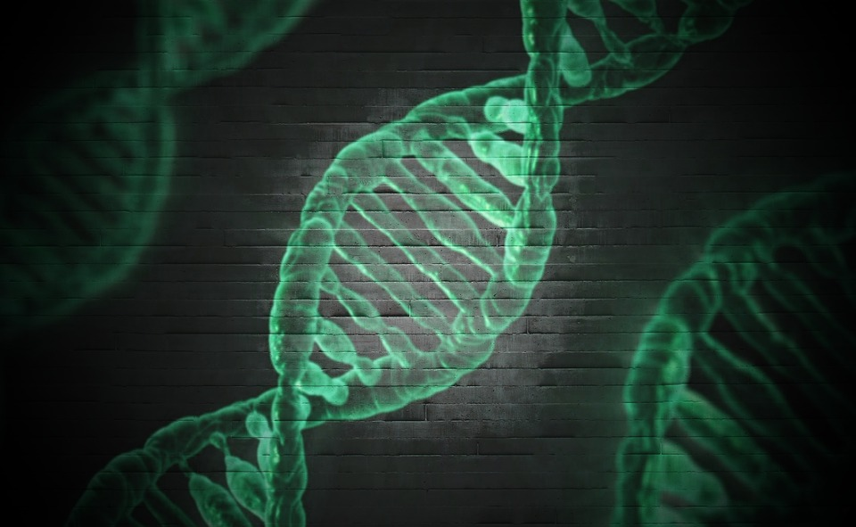 DNK vijačnica vsebuje navodila za delovanje telesa. Vir: Pixabay