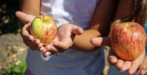 Anketiranci se prehranjujejo razmeroma zdravo. Vir: Pixabay