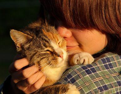 Tudi mački, ne le psi, so navezani na svoje lastnike. Vir: Phhere