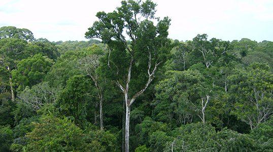 Podnebno nevtralnost bi lahko dosegli, če bi vsa drevesa, morja in zemlja dnevno vsrkala toliko izpušnih plinov kot jih človeštvo proizvede. Vir: Nasa