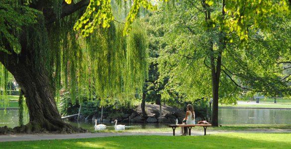 Sprehodi s psom v parku so še dovoljeni. Vir: Josephine Baran/Unsplash