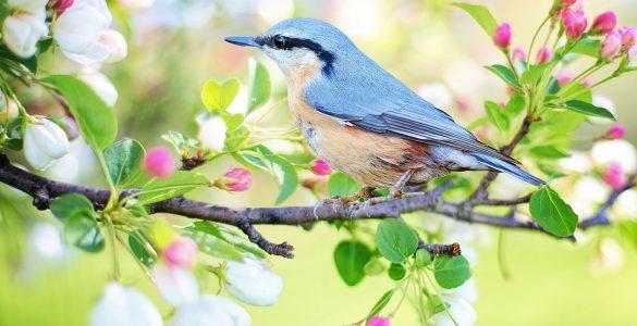 Gregorjevo je dan, ko se ženijo ptički. Vir: Pixabay