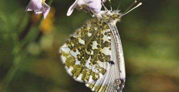 Ko spoznavamo svet živali in rastlin, te še bolj občudujemo in spoštujemo, pravi Urša Adamič, ki v Časorisu piše o znanosti. Vir: Pixabay