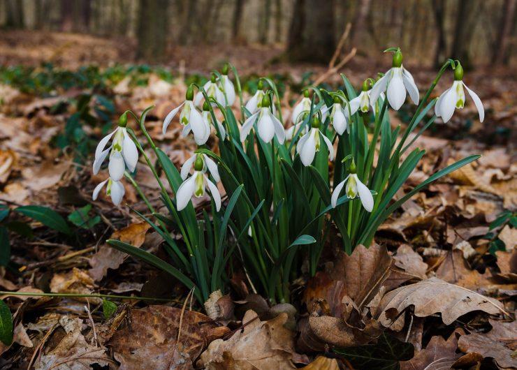 Aneja Kavalar si čas organizira tako, da ji ga ostane dovolj za sprehod v bližnjem gozdu. Vir: Pixabay