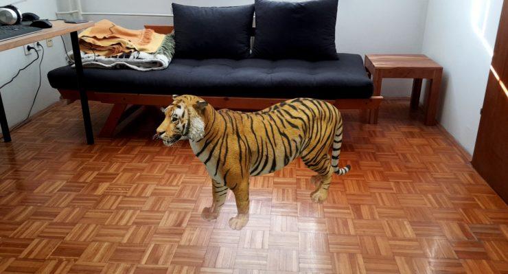 Tiger v sobi. Vir: Osebni arhiv