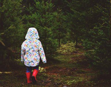 Gozdna pedagogika. Vir: Pixabay