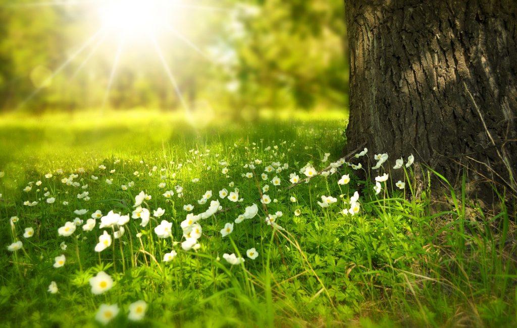 Pomlad, ko dopolniš 14 let, se ne bo vrnila. Vir: Pixabay
