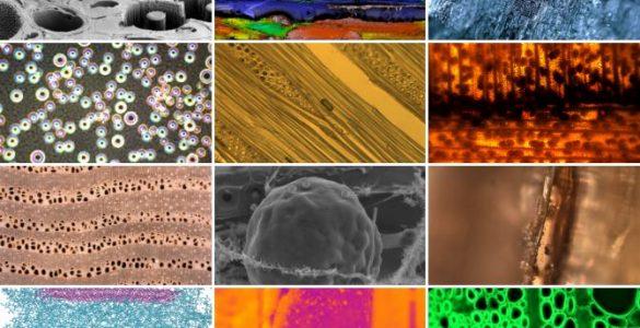 Kolaž fotografij z razstave Okviri znanost. Vir: Osebni arhiv
