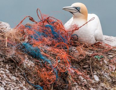 Odvržene ribiške mreže so nevarne pasti za živali. Vir: Pixabay