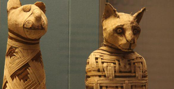 Mačje mumije. Vir: Britanski muzej