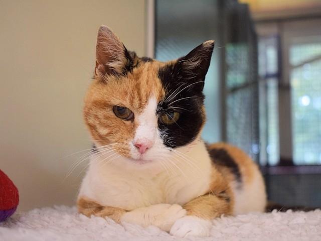 »Kako smo bili žalostni, ko se Georgie zadnji dan počitnic ni pojavila!« se spominja njena lastnica Amy Davies. »In kako lepo presenečenje je bilo, ko smo izvedeli ne le, da je dobro, temveč tudi, da se je ves ta čas očitno imela zelo dobro.« Vir: Cats Protection Glasgow