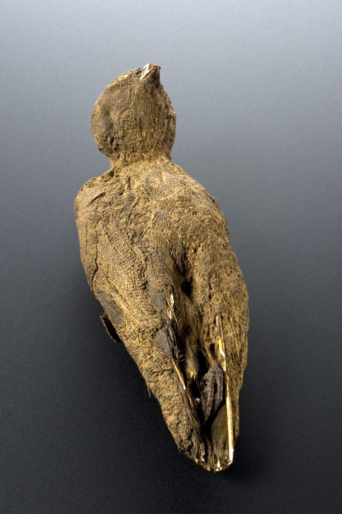 Mumificirana ptica. Vir: Wikimedia Commons