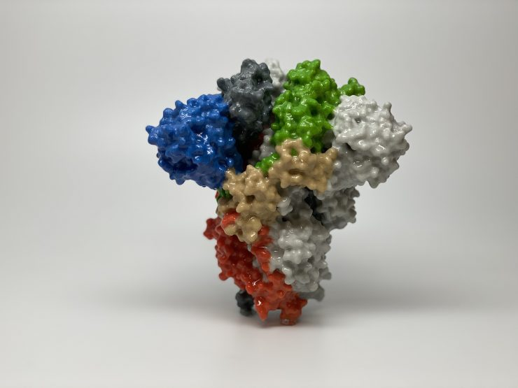 Novi koronavirus. Vir: Wikimedia