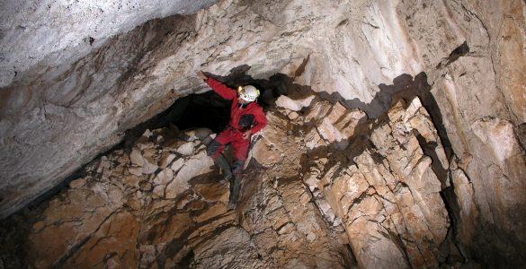 V jamah se skriva še veliko novih živalskih vrst. Vir: Wikimedia