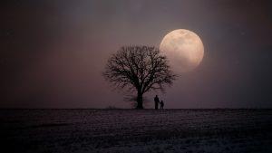 Osamelo drevo v zimski pokrajini. Vir: Pixabay