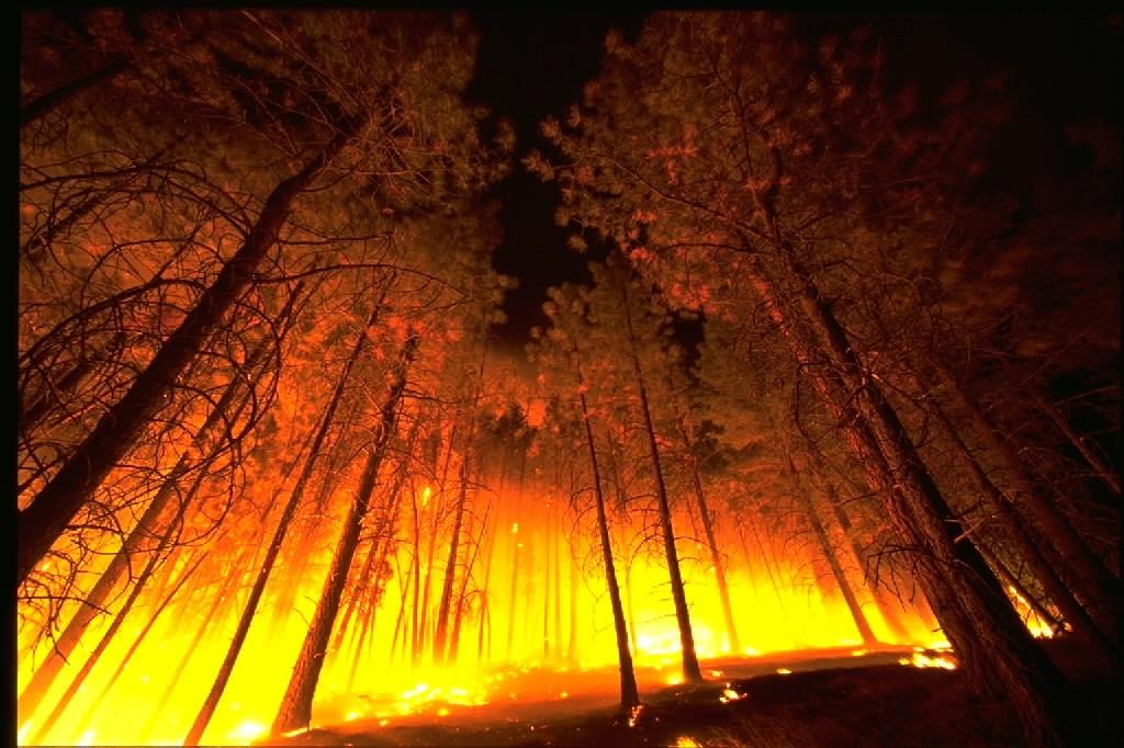 Gozdni požar. Vir: Wikimedia Commons