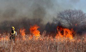 V letu 2020 je bilo veliko gozdnih požarov. Največji so divjali v Avstraliji in Kaliforniji. Vir: Pixabay