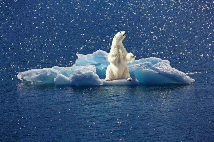 If this continues, polar bears will become extinct by the end of the century. Source: Pixabay