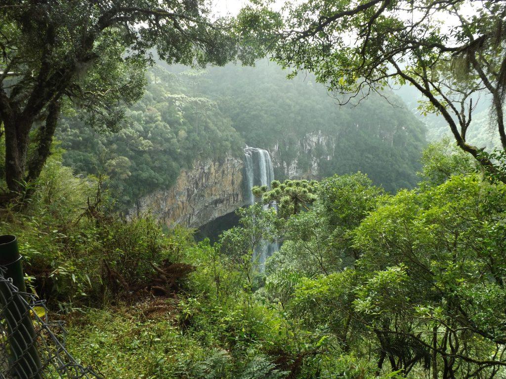 Neokrnjeni predeli Atlantskega gozda izgledajo kot pravi raj na Zemlji. Vir: Pixy.org