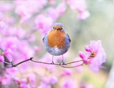 Gregorjevo je tudi dan, ko se po ljudskem izročilu ženijo ptički. Vir: Pexels