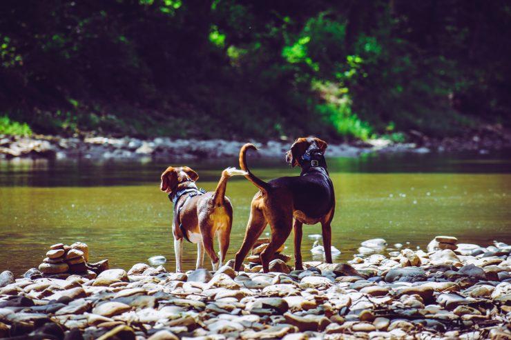 Če srečamo neznanega psa, ki ob sebi nima skrbnika, ga pustimo pri miru, saj ne vemo, kakšne volje je. Vir: Pexels