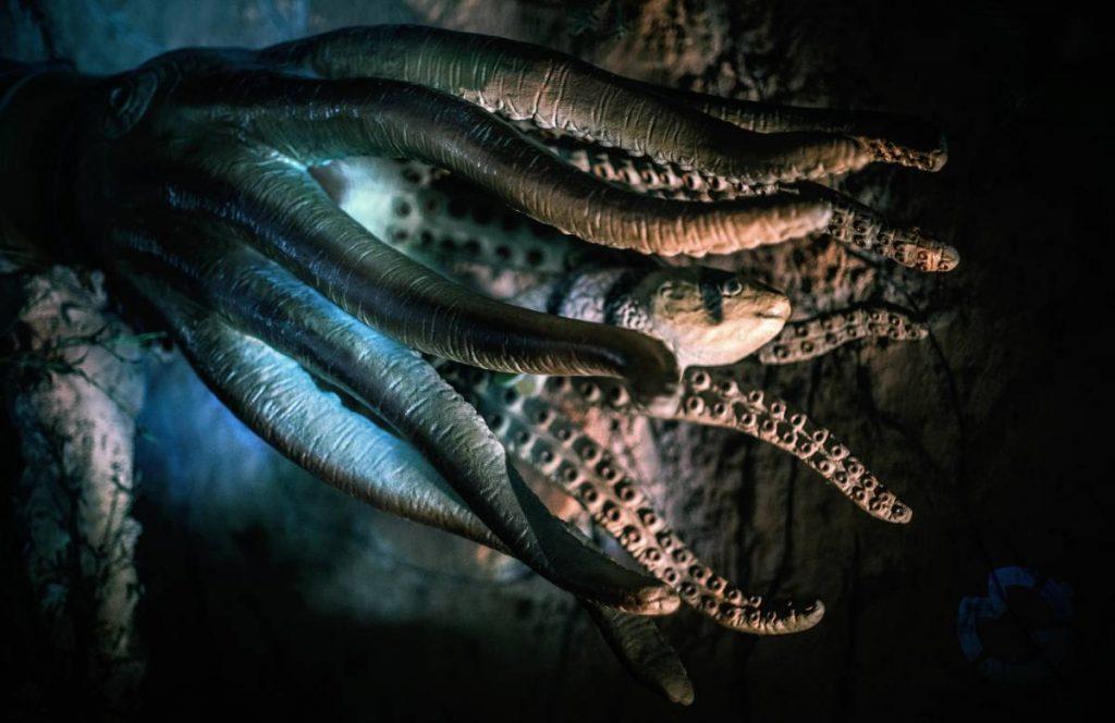 Hobotnice veljajo za zelo uspešne morske plenilce. Vir: Photo Stock Editor
