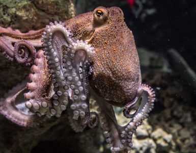Hobotnice si ob metu nastavijo material pod telo, iz katerega izpljunejo močan curek vode, ki odnese material v želeno smer. Vir: Pxfuel